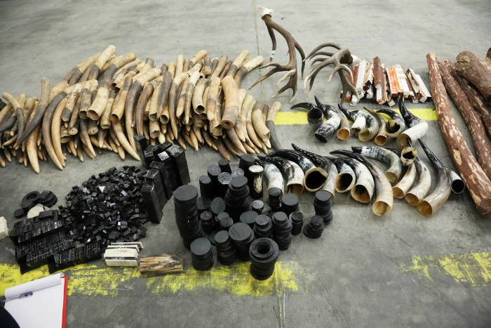 2272 pieces of ivory seized at Dubai airports